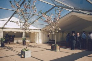 Marquee Blossom Tree